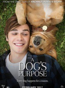 A-Dog's-Journey-หมา-เป้าหมาย-และเด็กชายของผม-2-(2019)-[ซับไทย]